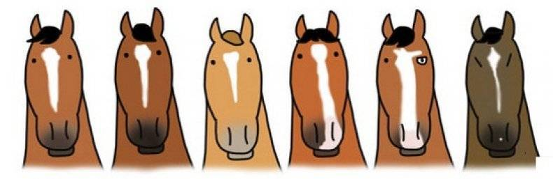 Какие бывают клички лошадей: особенности имен, правила называния, список кличек
