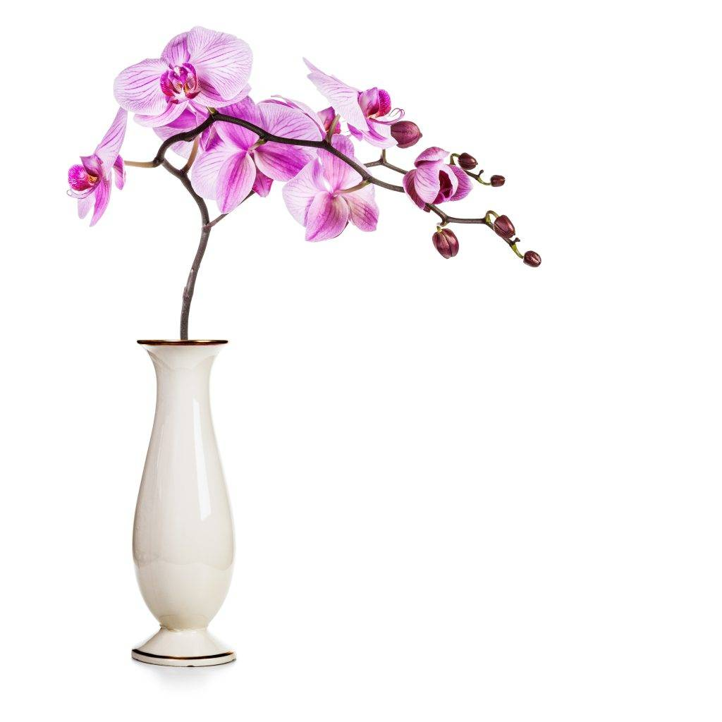 Орхидея в стеклянной вазе, колбе и горшке: фото, особенности посадки и выращивания растения, можно ли держать цветок в таких сосудах и как это правильно делать? selo.guru — интернет портал о сельском хозяйстве