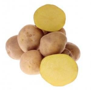 Картофель метеор: описание сорта, фото, отзывы