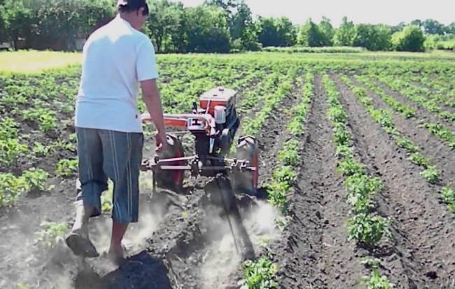 Способы окучивания картофеля   садоводство и огородничество