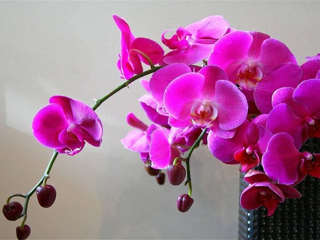Тонкости пересадки орхидеи в другой горшок. нужно ли осуществлять полив растения и как это правильно делать?