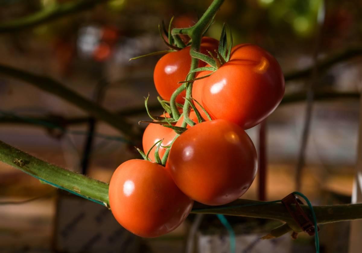 Когда и чем подкармливать огурцы летом: удобрения для обильного плодоношения