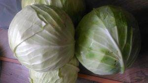 Как убрать горечь из капусты: разновидности и особенности