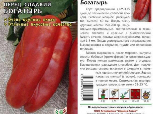 Популярный перец сорта «богатырь»: подробное описание, правила выращивания и фото