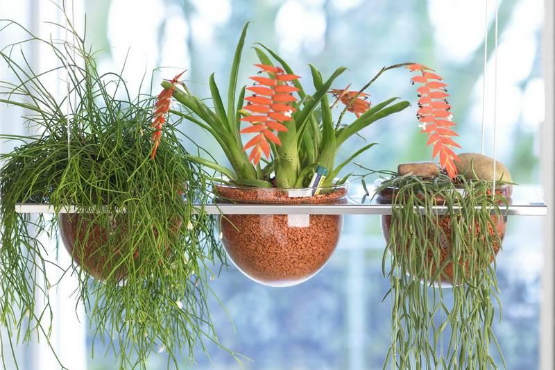 Популярно о выращивании орхидей в универсальном грануляте серамис