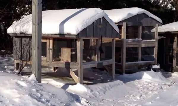 Особенности содержания и кормления кроликов зимой, рекомендации по уходу и разведению на улице