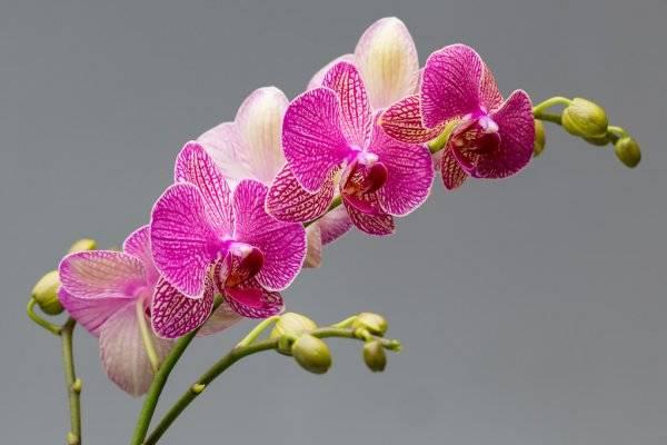 Мини-орхидеи: особенности и советы по уходу