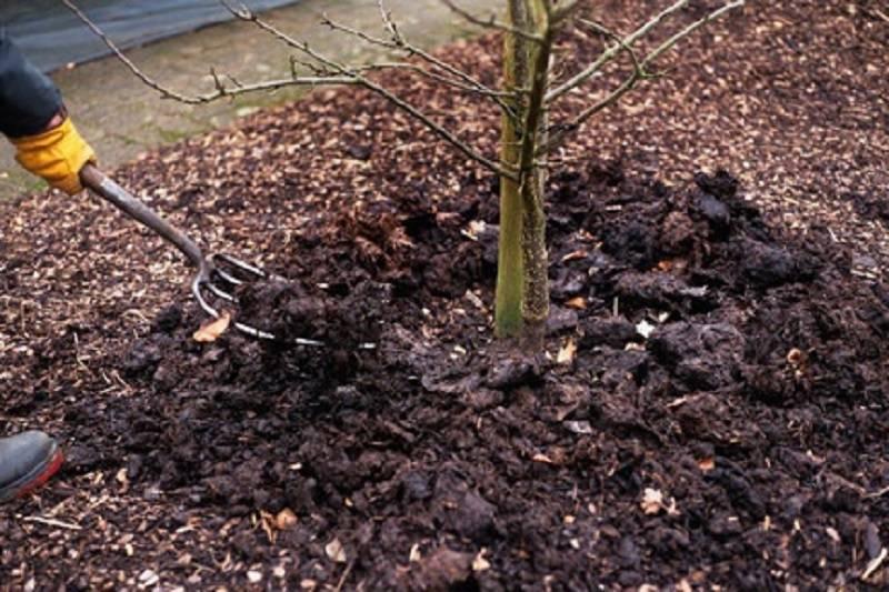 Посадка вишни в подмосковье: советы для начинающих садоводов
