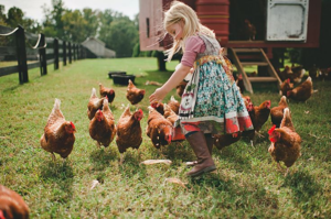 Чем кормить кур, чтобы они лучше неслись