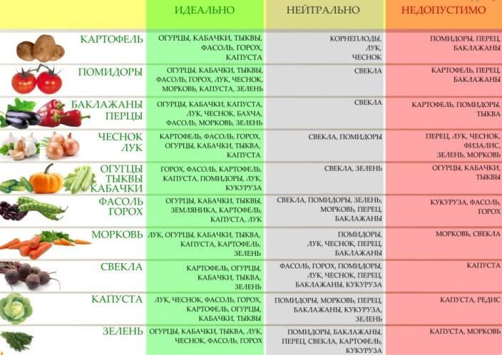 Таблица севооборота овощей на грядках: что после чего сажать   огородовед