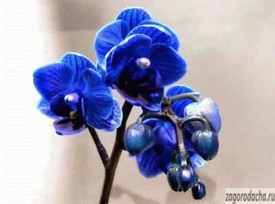 Королева орхидей — ванда: описание, сорта, уход в домашних условиях