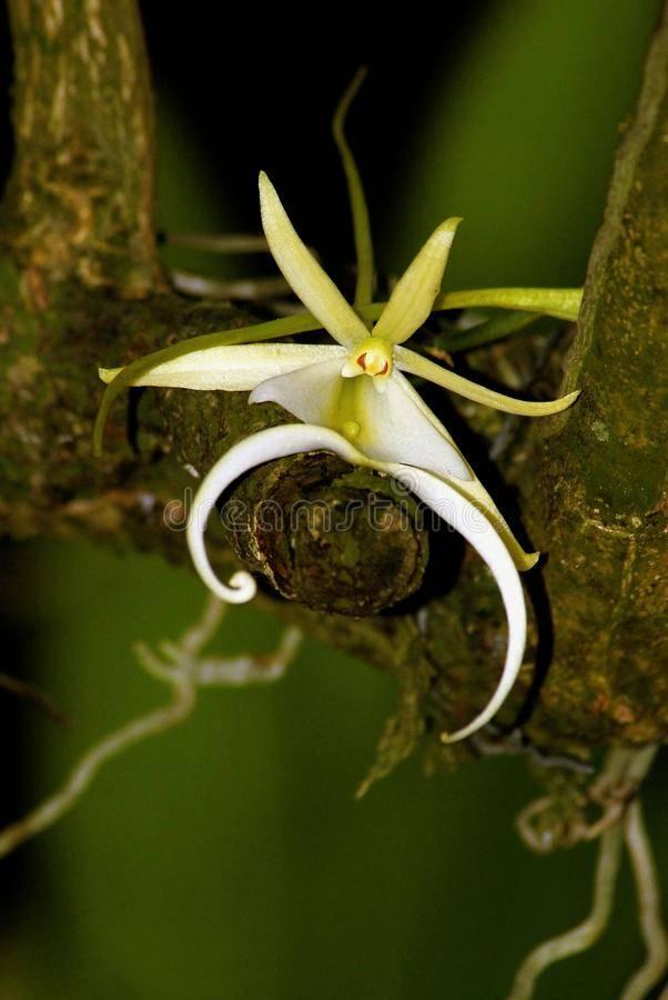 Необычные орхидеи (40 фото): описание орхидей «попугай» и «балерина», «мартышка» и других. самые странные формы растений