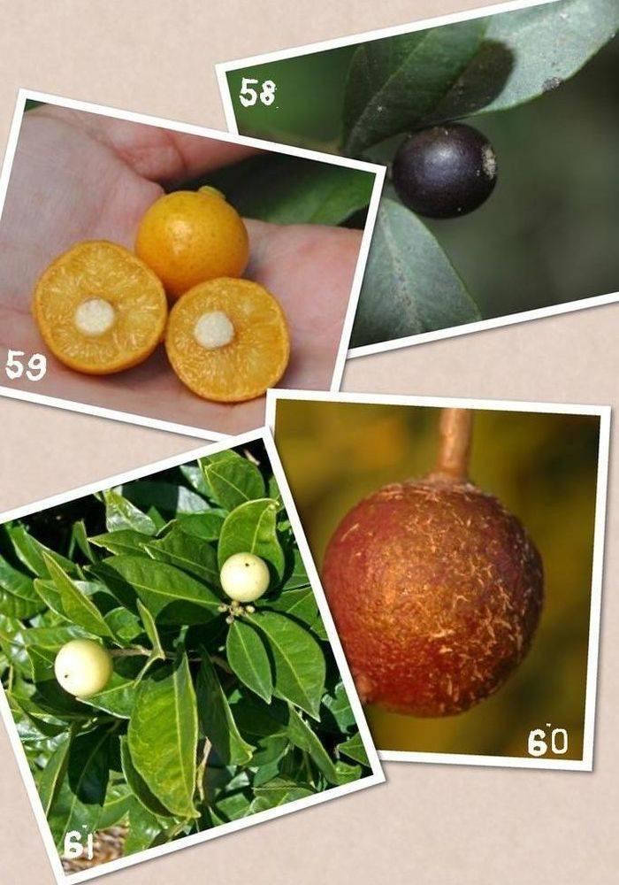 Цитрусовые фрукты: список названий, что относится, виды