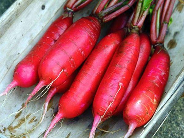 Редис селеста f1: описание сорта, особенности выращивания