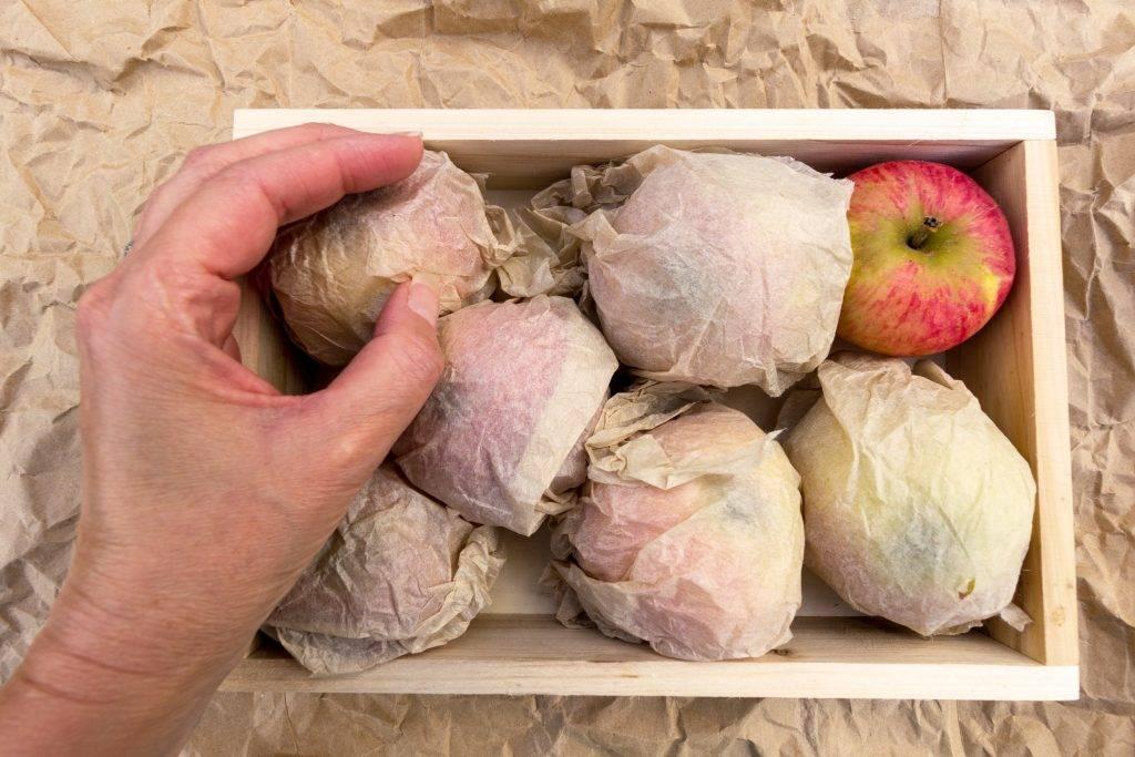 Хранение яблок в домашних условиях на зиму: как сохранить в квартире и погребе, при какой температуре