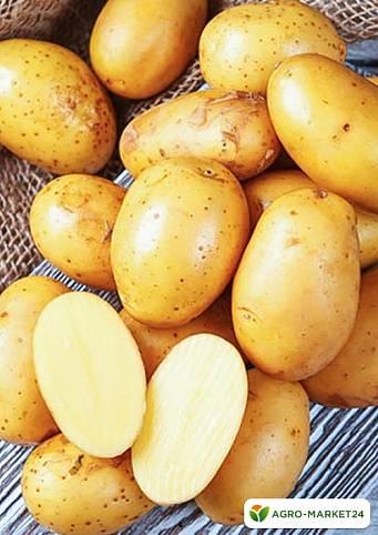 Какой тип плода картофеля и чем он характерен