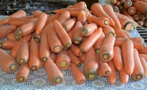 ✅ лосиноостровская: описание сорта моркови, характеристика, выращивание - tehnomir32.ru