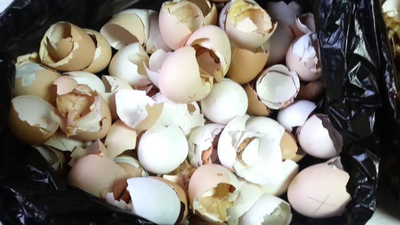 Почему у куриных яиц очень тонкая скорлупа и что делать