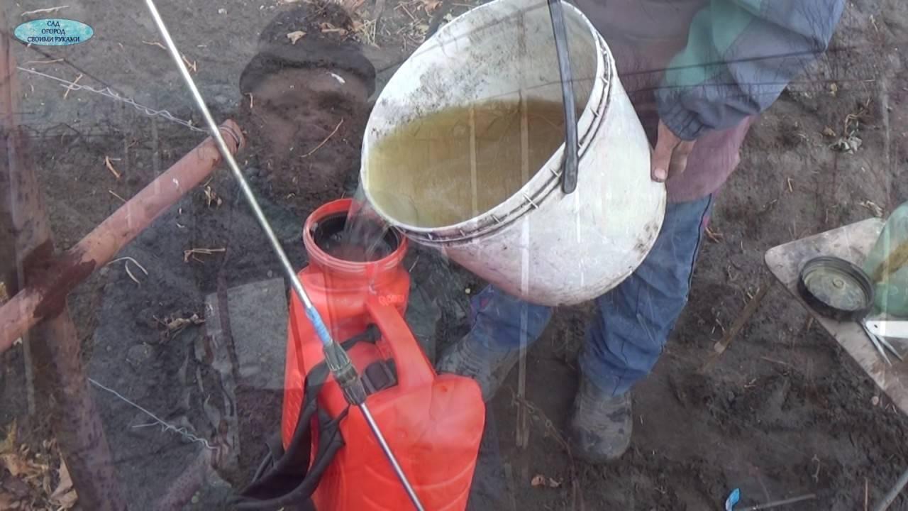 Как обработать виноград осенью перед укрытием на зиму, эффективные средства