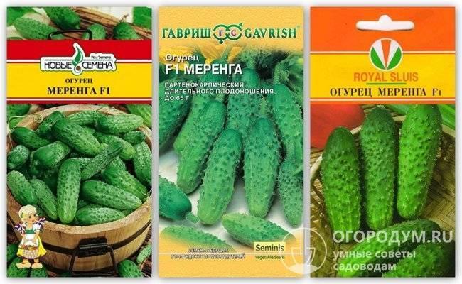Огурец все путем f1: отзывы, описание сорта, посадка и уход, фото семян аэлита
