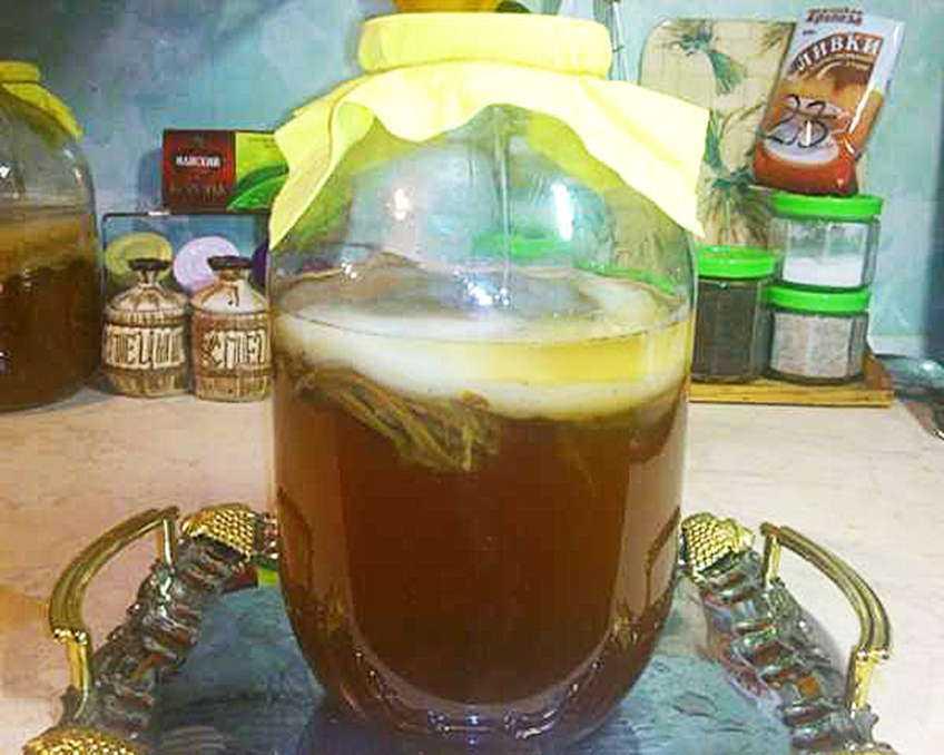 Второе пришествие чайного гриба. почему напиток из ссср вновь в моде | здоровая жизнь | здоровье | аиф челябинск