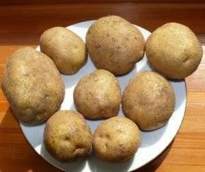 Картофель венета: описание сорта, фото, отзывы дачников о раннем виде винета, характеристика вкусовых качеств, советы агрономов как правильно выращивать