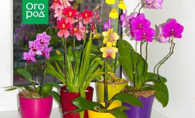 Когда пересаживать орхидею после покупки в домашних условиях, а также можно и нужно ли это делать сразу, как принесли из магазина?