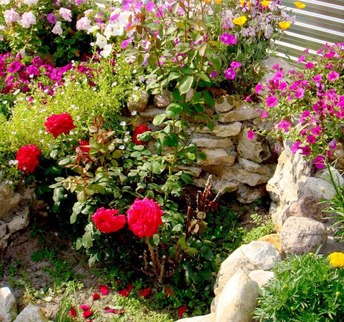 Розарий на даче своими руками: фото красивых клумб, дизайн и схемы посадки кустов