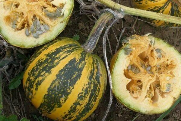 Голосемянная тыква: характеристика и описание сорта с фото, польза и вред, как употреблять семена, семечки без кожуры, отзывы и выращивание