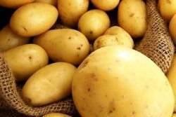 Норма посадки картофеля на 1 гектар и сотку (в шт. и кг)