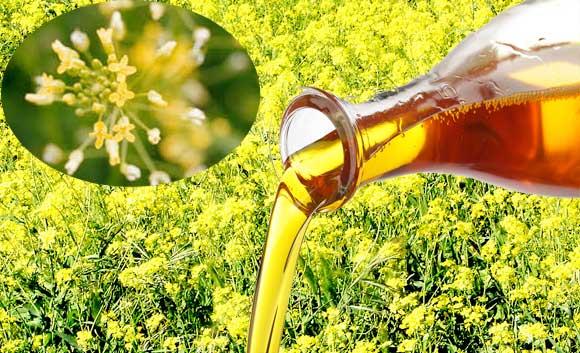 Рыжиковое масло нерафинированное: польза и вред для организма
