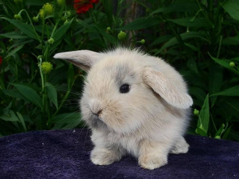 Интересные факты о кроликах домашних. кролики — интересные факты
