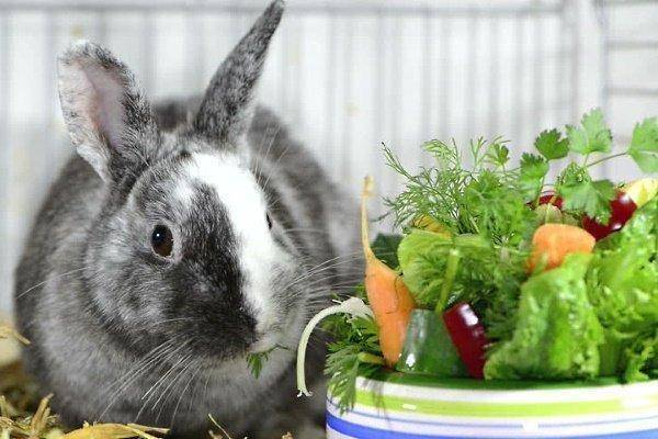 Можно ли давать кроликам капусту?