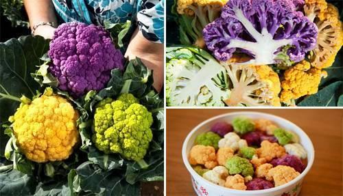 Цветная капуста — химический состав, пищевая ценность, бжу