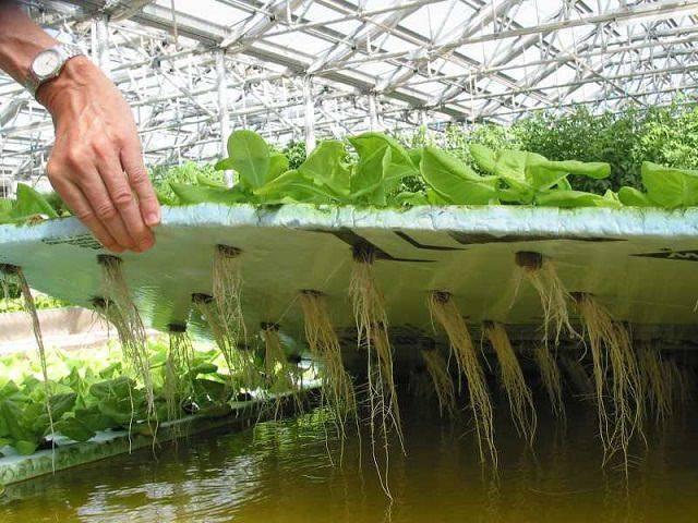 Оборудование для выращивания на гидропонике