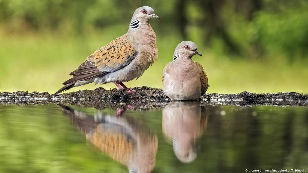 Породы голубей: фотографии, названия и описание домашних и декоративных видов