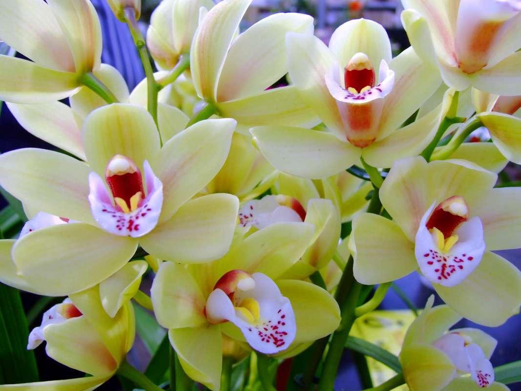 Как нарастить корни у орхидеи фаленопсис: рекомендации, как спасти растение и способы реанимации цветка в воде и над ней, а также последующий уход за любимцем selo.guru — интернет портал о сельском хозяйстве