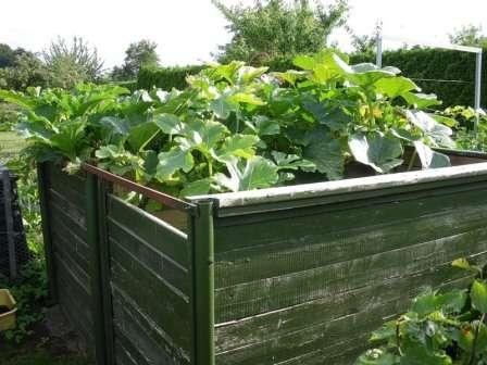 Выращивание кабачков в открытом грунте: сорта, подготовка и уход