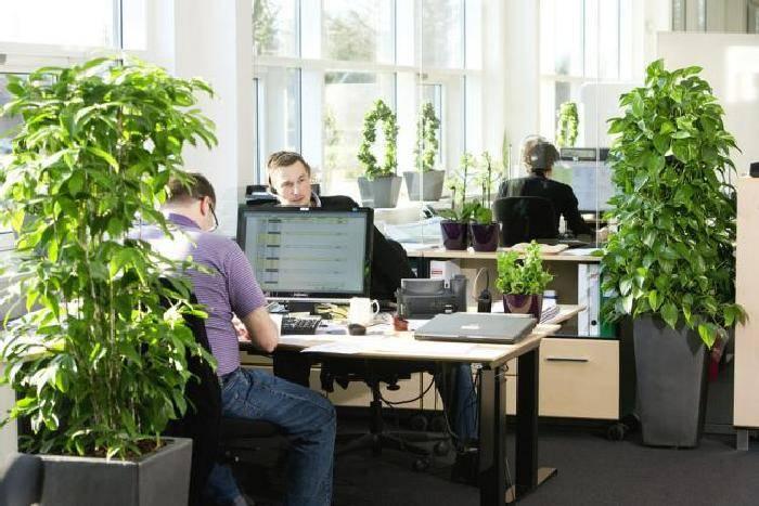 Неприхотливые цветы для офиса - фото + названия
