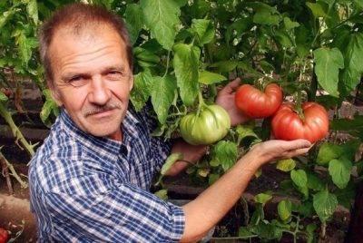 Что класть в лунку при посадке помидор в теплице, для увеличения урожая