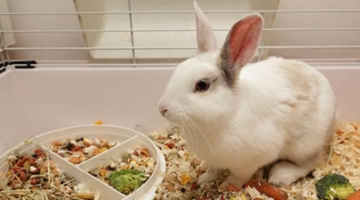 Какие витаминные добавки требуются для здоровья кроликов
