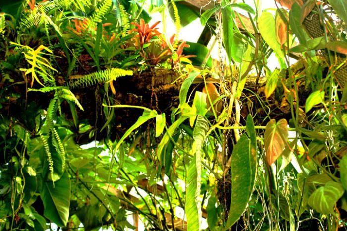 Симбиоз грибов с растениями и деревьями: как проявляется