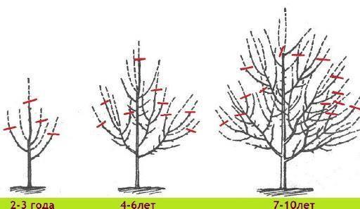 Уход за яблоней осенью и ее подготовка к зиме: объем и порядок работ