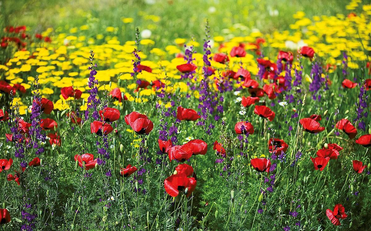 Как сеять газонную траву своими руками весной на своем участке