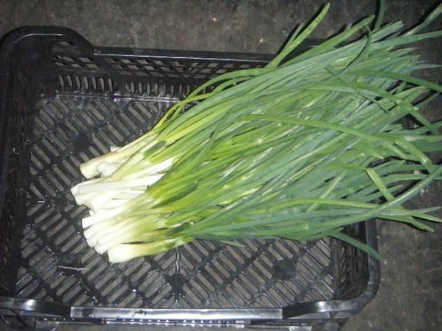 Выращивание лука методом гидропоники: описание