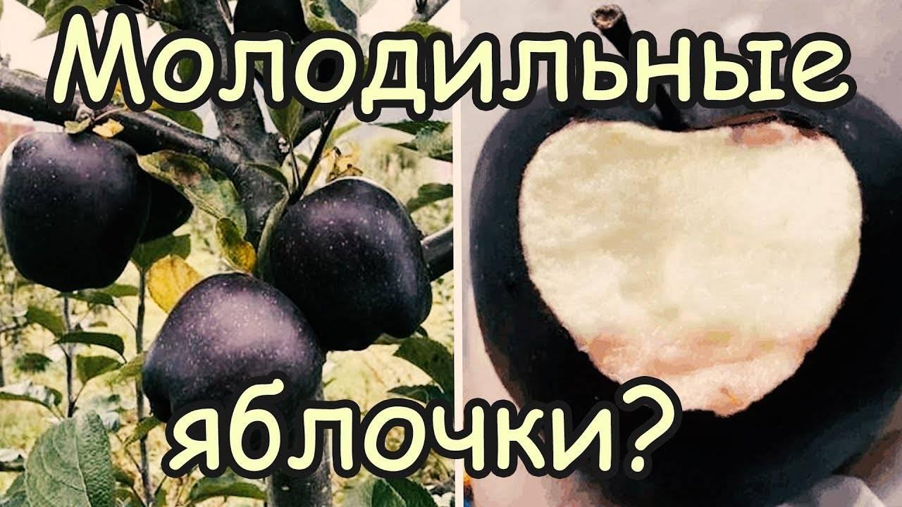Яблоня розовый жемчуг: описание сорта, фото и отзывы