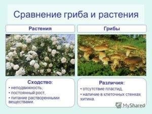 Укажите черты сходства грибов с растениями и животными - универ soloby
