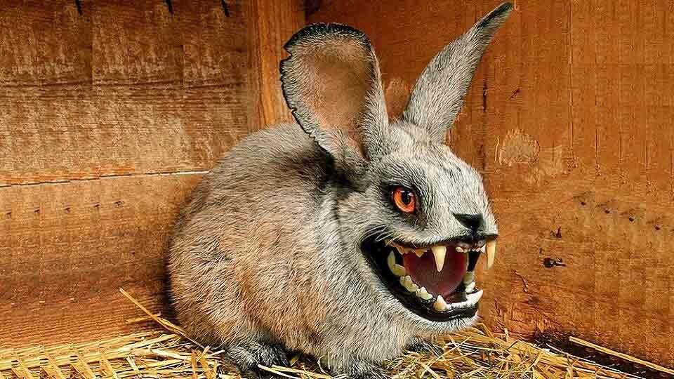 Факты о кроликах. кролики — интересные факты