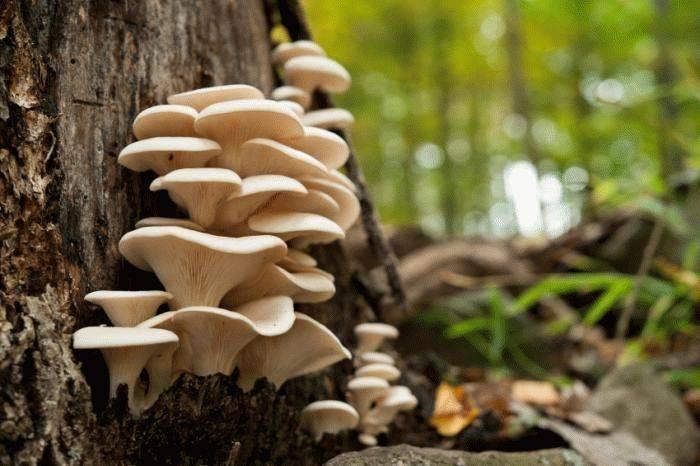 Грибы на дереве: съедобные и ядовитые, виды и фото