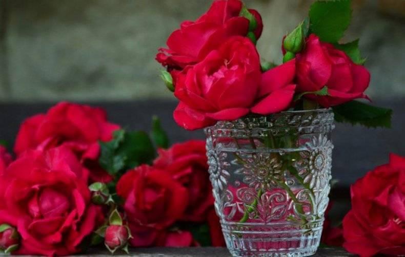 Как сохранить срезанные розы свежими в вазе надолго